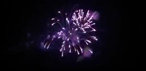 6″ Ядро Пальма пурпурна